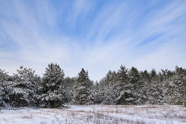 寒い日には雪と青い曇り空に覆われたモミの木と冬の森の不思議の国の背景 Premium写真