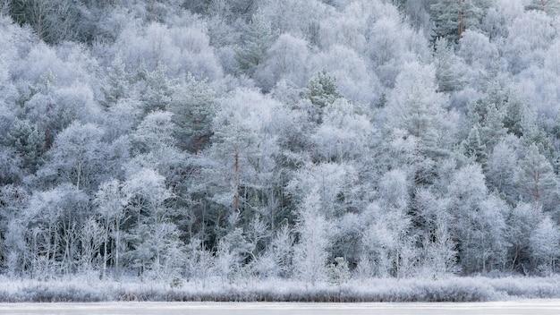 Paesaggio invernale, fredda mattina di novembre, alberi bianchi gelidi. Foto Gratuite