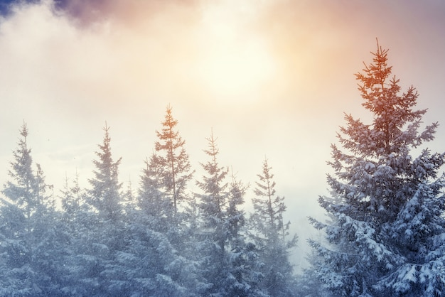 Winter landscape glowing by sunlight. dramatic wintry scene. Premium Photo