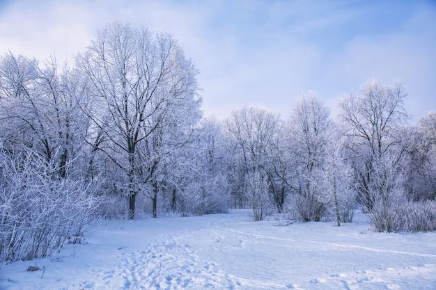 Зимний пейзаж заснеженных ветвей деревьев против красочного неба Premium Фотографии