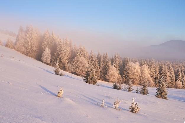 Зимний пейзаж деревья и забор в иней, фон с некоторыми мягкими бликами и снежные хлопья Бесплатные Фотографии