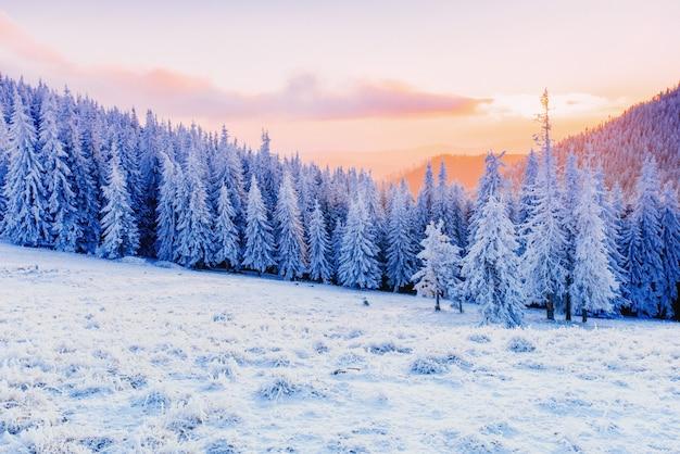 Winter landscape trees in frost Premium Photo