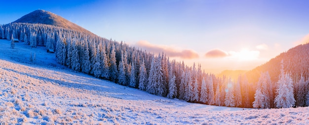 Winter landscape trees in frost Premium Photo
