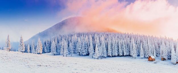 Зимний пейзаж деревьев в мороз Premium Фотографии