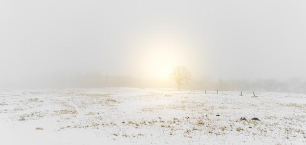 Winter landscape  trees on snow Free Photo