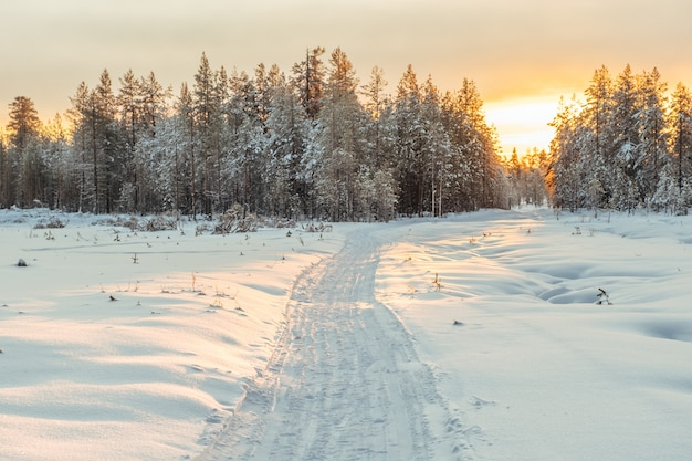 Winter landscape. winter road through a snow-covered forest Premium Photo