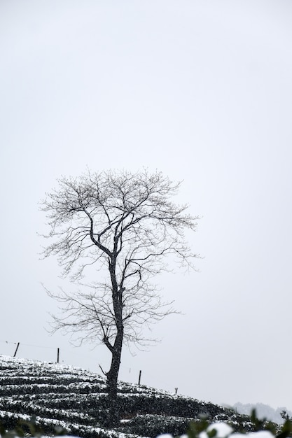 Winter landscape with leafless tree Free Photo