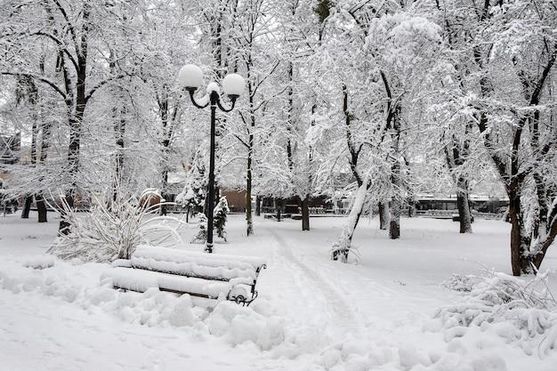 Зимний пейзаж с деревьями и снегом в городском парке. деревья ковы Premium Фотографии