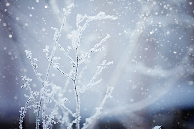 Winter nature background Premium Photo