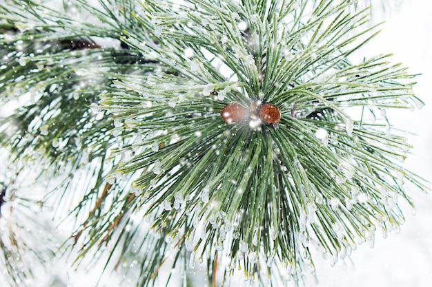 Winter photography. selective focus. Premium Photo