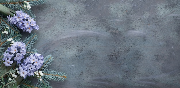 Winter table in green and blue: hyacinth flowers, fir twigs and leaves on dark, copy space Premium Photo