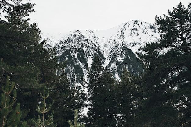 Зимний вид на горы, красивый горный пейзаж в стране чудес Premium Фотографии