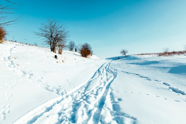 Wintry landscape scenery with modified cross country skiing way Free Photo