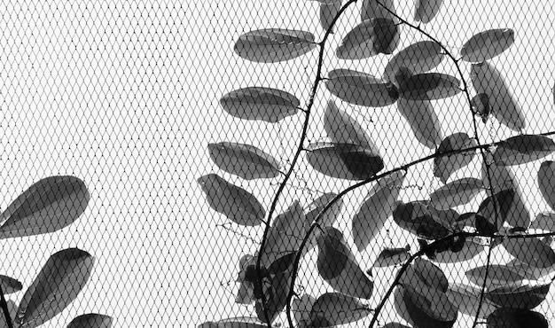 Wire mesh with ivy Premium Photo