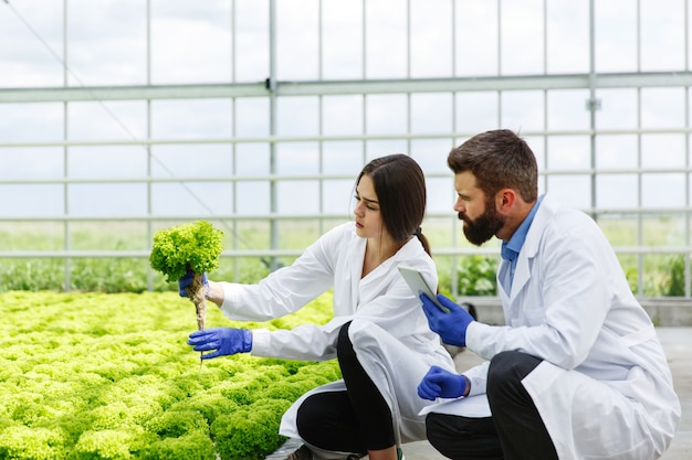 Woman and man in laboratory robes examine carefully plants in the greenhouse Free Photo