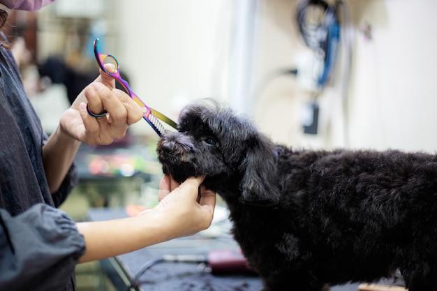 여자는 머리 개를 절단합니다. 프리미엄 사진