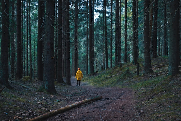 Woman bright yellow raincoat walking on a path in a foggy dark forest Premium Photo