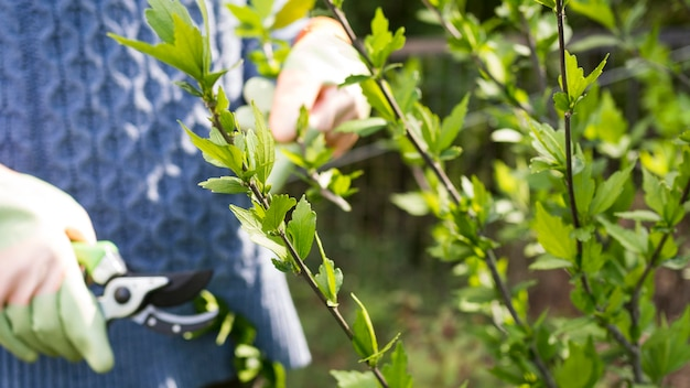 Woman cutting leaves from her garden close-up Premium Photo