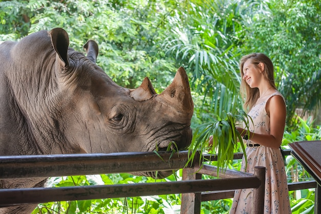 Woman feeding the big rhino Premium Photo