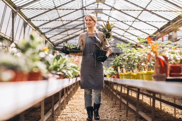 Woman gardner looking after plants in a greenhouse Free Photo