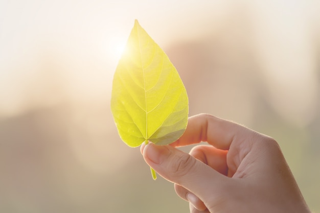 Woman hand holding the leaf Premium Photo