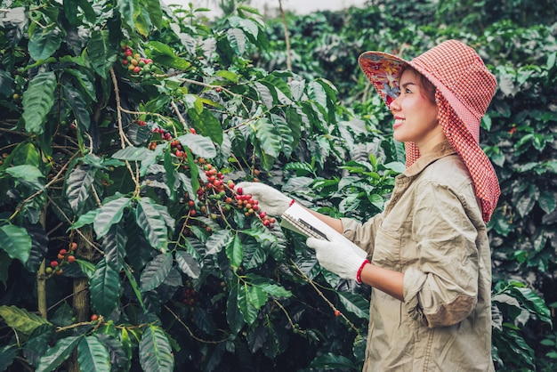 A woman in the hand holding a notebook and standing close to the coffee tree, learning about coffee Premium Photo