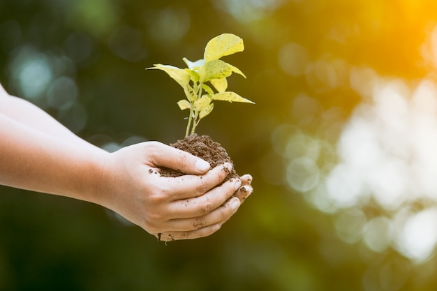 Woman hand holding young tree for prepare into soil as save world concept Premium Photo