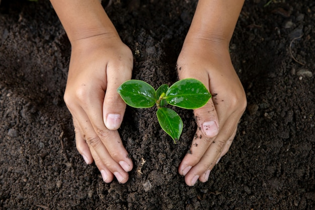 Woman hand planting young tree on black soil.close up.world environment day.earth day concept Premium Photo