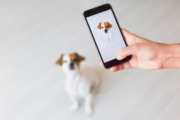 Woman hand with mobile smart phone taking a photo of a cute small dog over white Premium Photo