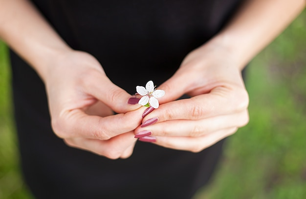 Woman hand with a spring blossom. sakura flower Premium Photo