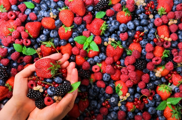 Woman hands holding organic fresh berries against the background of strawberry, blueberry, blackberries, currant, mint leaves. Premium Photo