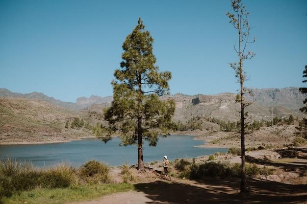 晴れた日に美しい湖を見下ろす松の木の横にある女性ハイカー 無料写真