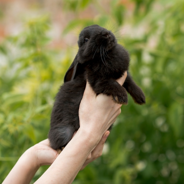 Woman holding a black rabbit Free Photo