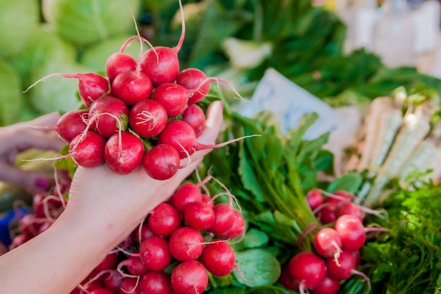 Woman holding fresh radishes. dieting,healthy eating and lifesty Free Photo