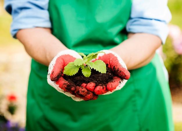 手に小さな植物を持っている女性 無料写真