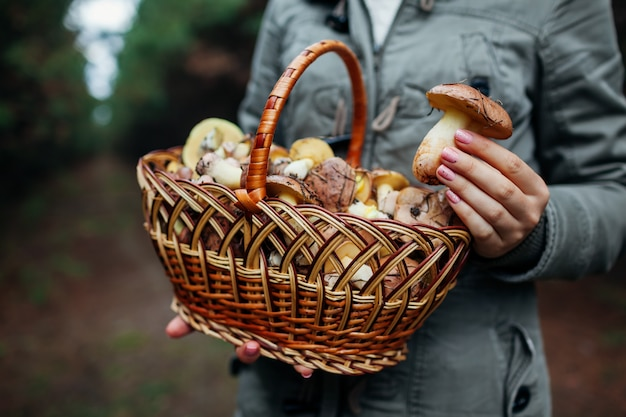 Woman holds basket of oily mushrooms in autumn forest. picking up fresh organic slippery jack mushrooms Premium Photo