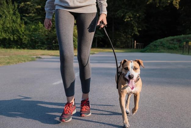 Женщина в тренировочном костюме с собакой. молодая подтянутая сука и стаффордширский терьер делают утреннюю прогулку в парке Premium Фотографии