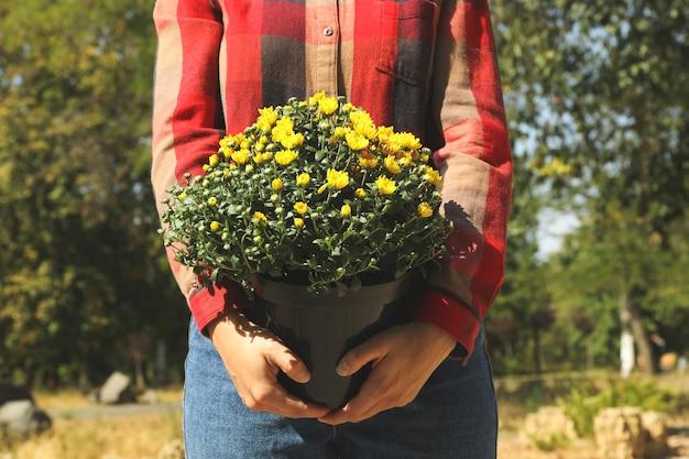 シャツとジーンズの女性は、屋外の菊とポットを保持します Premium写真