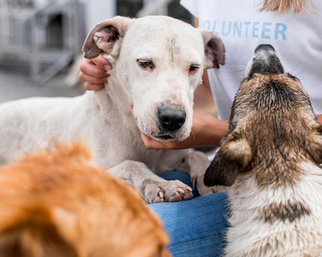 Donna che interagisce con cani da salvataggio al rifugio Foto Gratuite