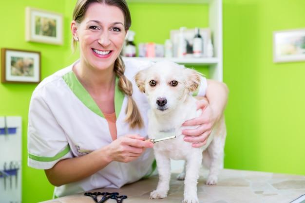 Woman is examining dog for flea at pet groomer Premium Photo