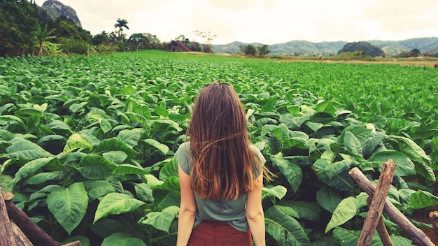 A woman looking at green tobacco field in cuba Premium Photo