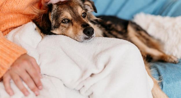 Очаровательная собака ласки женщина Premium Фотографии