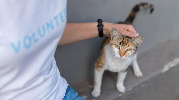Free Photo Woman Petting Cute Rescue Cat