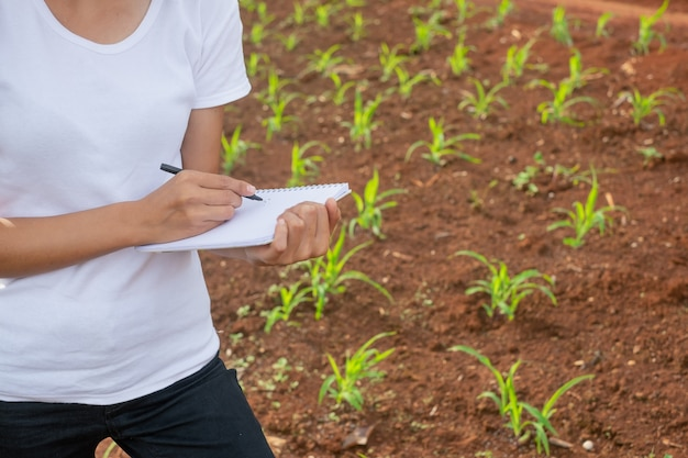 Woman plant researchers are checking and taking notes in corn seedlings fields. Premium Photo