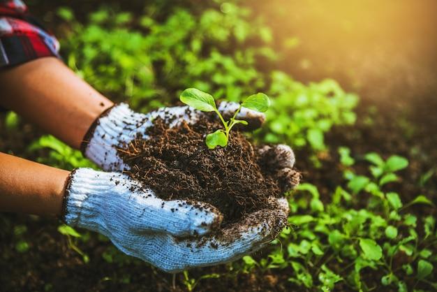 Woman plant vegetables Premium Photo