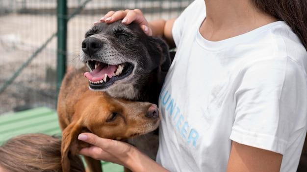Donna che gioca con cura cani da salvataggio al rifugio Foto Gratuite