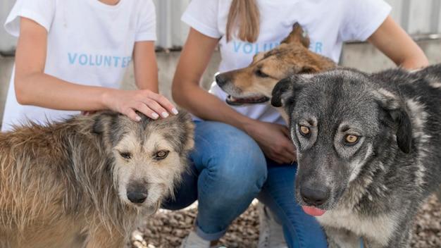 Donna che gioca con i cani da salvataggio al rifugio Foto Gratuite