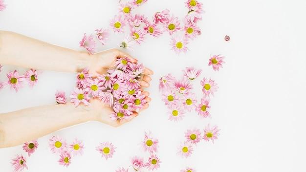 Woman's hand holding beautiful pink flowers Free Photo