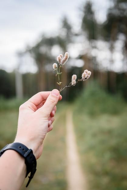 Женская рука держит траву на фоне дороги Premium Фотографии
