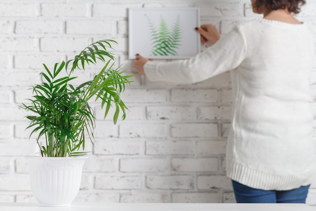 Woman's hand is holding photo frame and concrete pot with home plant Premium Photo